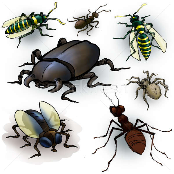 Insects Stock photo © Aiel