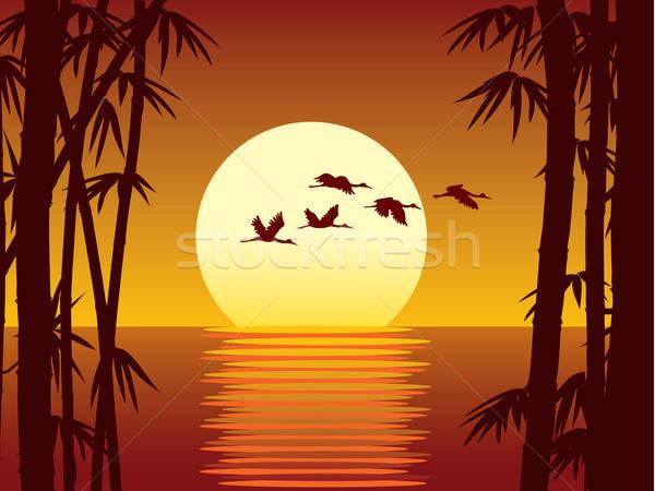Bambusa zachód słońca ilustracja lasu wody drzewo Zdjęcia stock © Aiel