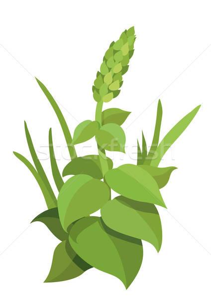 Leafy plants Stock photo © Aiel