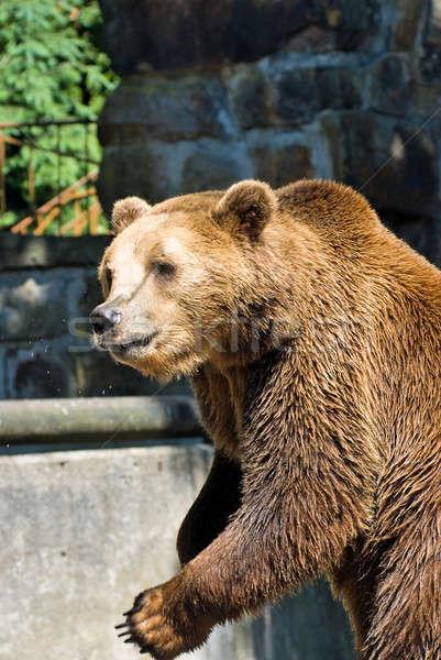 Bruine beer dierentuin zomer dag beer dier Stockfoto © Aikon