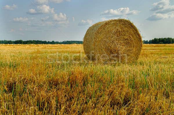 Széna bála mezőgazdaság mező égbolt vidéki Stock fotó © Aikon