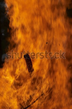 Forest fire Stock photo © Aikon