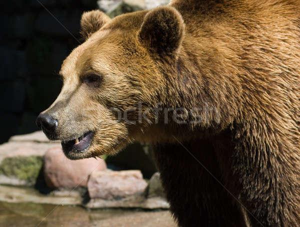 Hayvanat bahçesi yaz gün ayı hayvan Stok fotoğraf © Aikon