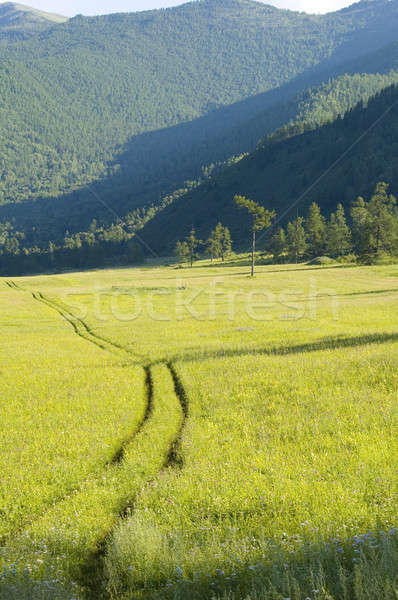 Yellow road in mountains Stock photo © Aikon
