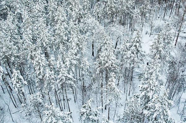 Légifelvétel tél erdő Szibéria hó utazás Stock fotó © Aikon