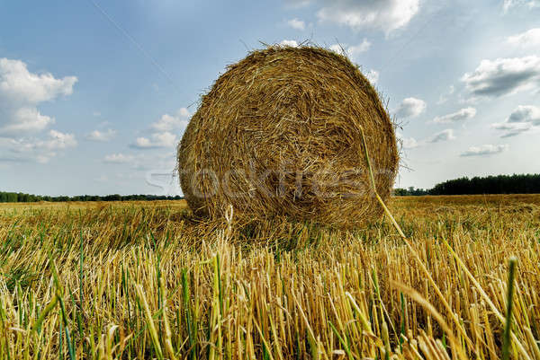 Beautiful landscape with straw bales in autumn Stock photo © Aikon