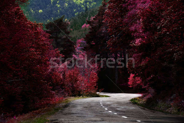 Mountain road. Stock photo © Ainat