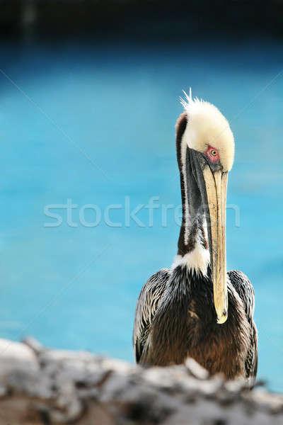 Portré közelkép szemek tenger óceán madár Stock fotó © Ainat