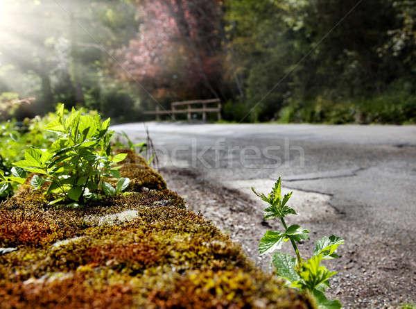 Hegy út részlet oldal tavasz férfi Stock fotó © Ainat