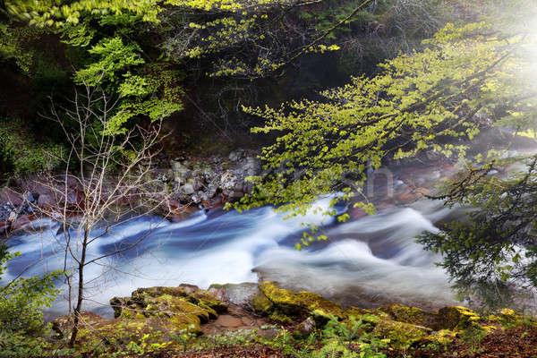 Erdő folyó gyönyörű díszlet hegyek lefelé Stock fotó © Ainat