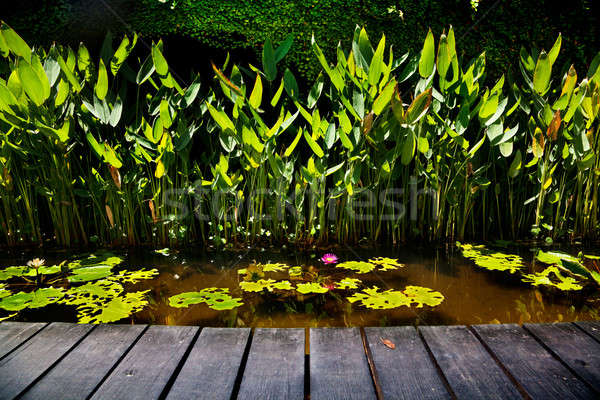 Bois plate-forme mer rose Lotus Photo stock © Ainat