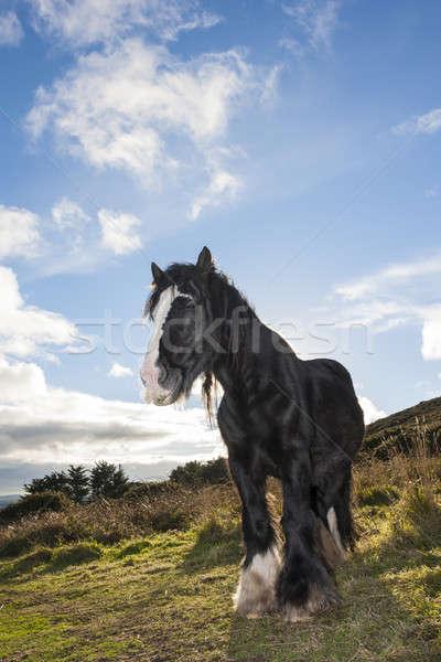 Black horse at the mountain Stock photo © Aitormmfoto
