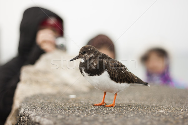 People watching a bird Stock photo © Aitormmfoto