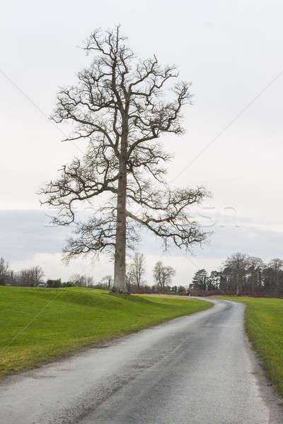 Road to future Stock photo © Aitormmfoto
