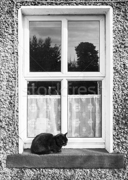 猫 肖像 黒猫 ウィンドウ ホーム ストックフォト © Aitormmfoto