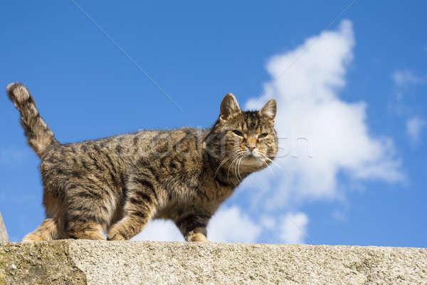 Bella cat dolce muro cielo occhi Foto d'archivio © Aitormmfoto