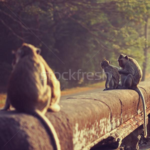 Macaco sessão antigo ruínas Angkor Wat natureza Foto stock © ajfilgud