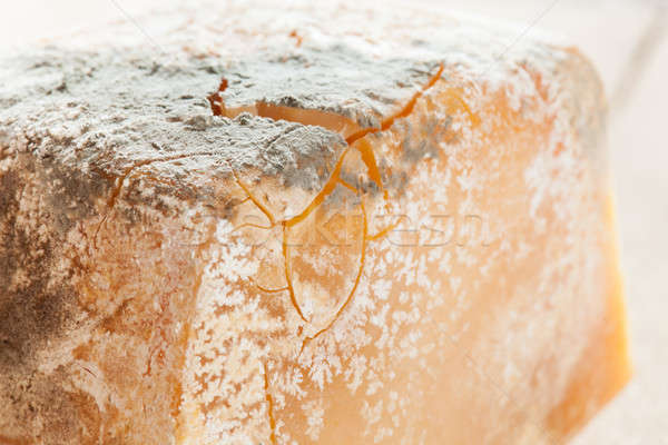 Mold on food Stock photo © ajfilgud