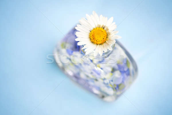 духи природы цветок лепестков подобно бутылку Сток-фото © ajfilgud