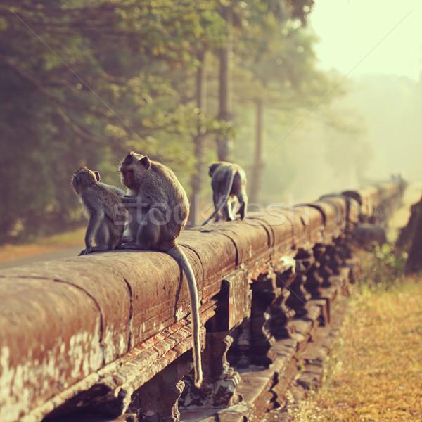 Maymun oturma eski ören Angkor Wat doğa Stok fotoğraf © ajfilgud