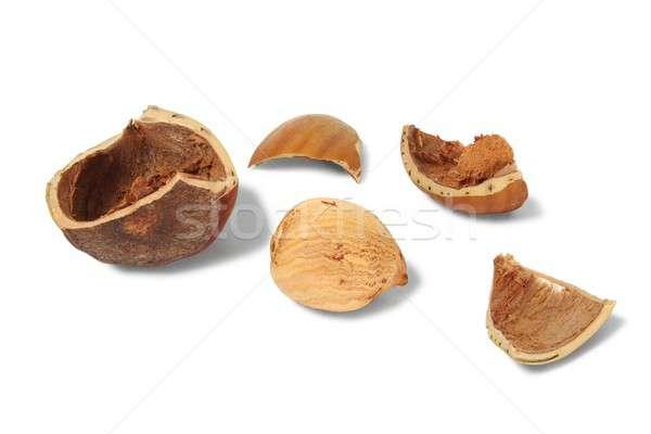 Brisé shell blanche Photo stock © ajt