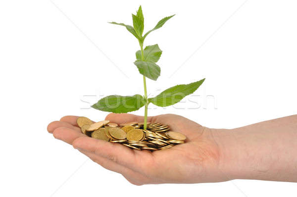Stock photo: Plant and Coins