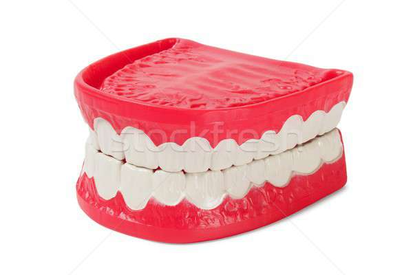 Denture on white Stock photo © ajt