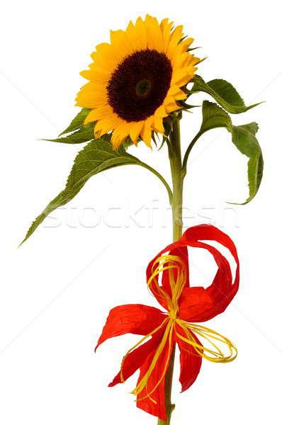 Sunflower Stock photo © ajt