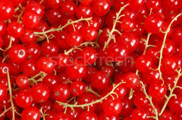 Red Currants Stock photo © ajt