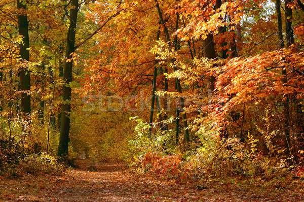 Jesienią lasu krajobraz spadek drzew kolorowy Zdjęcia stock © ajt