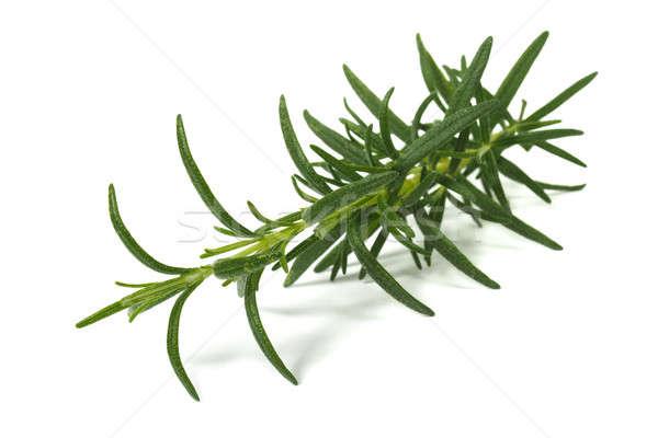 Rosmarijn kruid witte groene plant Spice Stockfoto © ajt