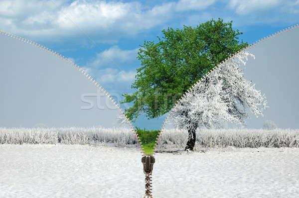 Zíper temporadas inverno verão grama neve Foto stock © ajt