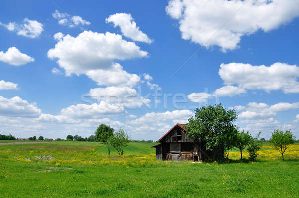 Summer landscape with abandoned farm house Stock photo © ajt