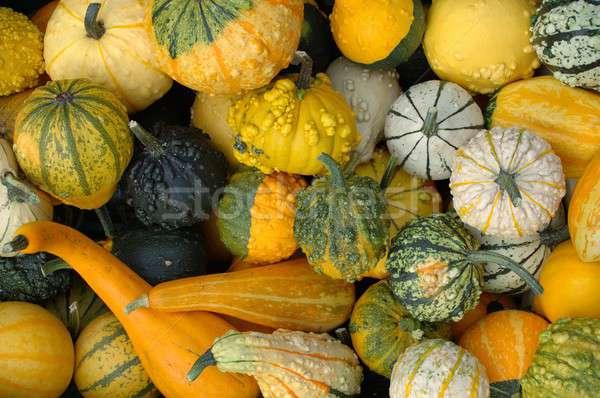 Pumpkins Stock photo © ajt