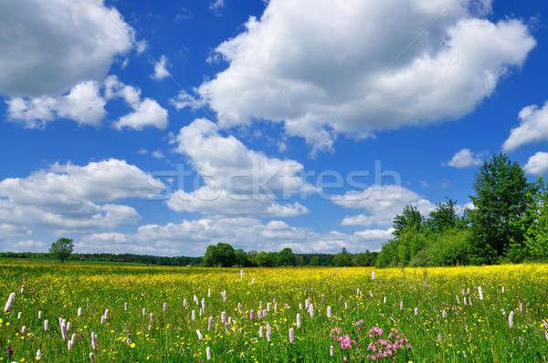 Tavasz tájkép legelő tele virágok kék ég Stock fotó © ajt