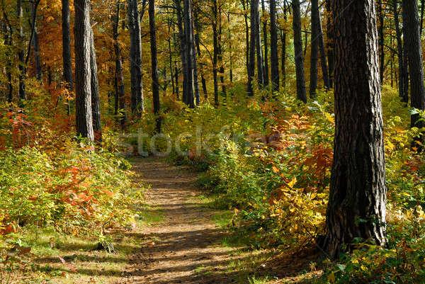 Yol sonbahar orman güneşli hava durumu Stok fotoğraf © ajt