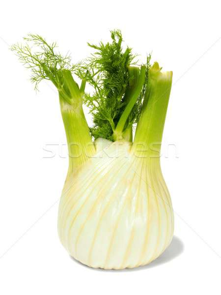 Florence fennel bulb on white Stock photo © ajt