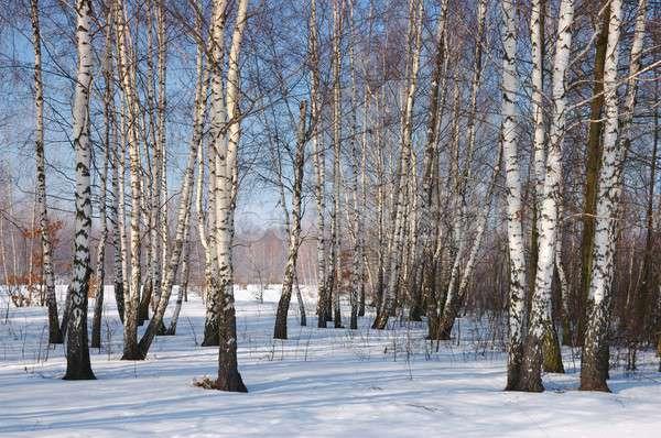 Winter Stock photo © ajt