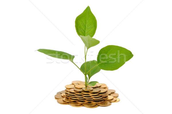 Növény érmék fiatal izolált fehér pénzügy Stock fotó © ajt
