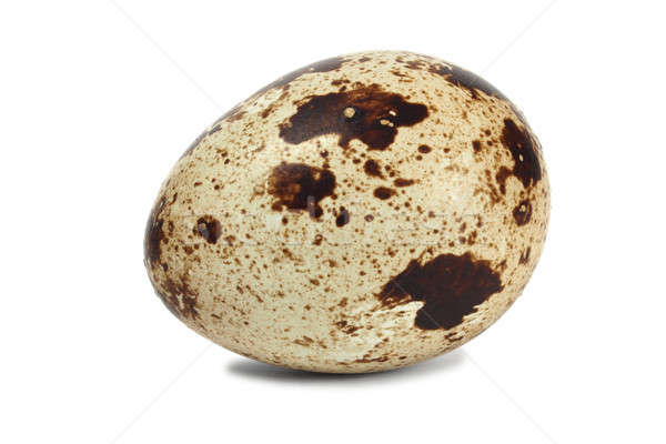 Quail egg Stock photo © ajt