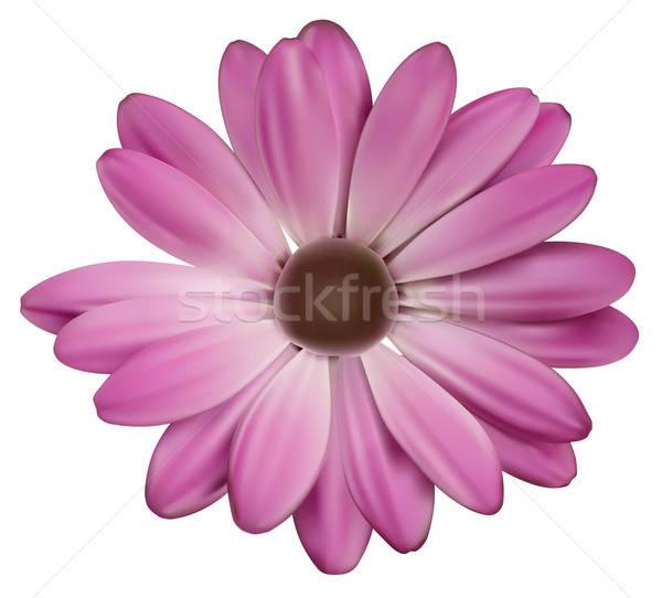 Flower solo Stock photo © akaprinay