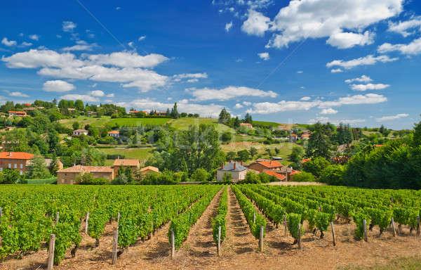 Vineyard in Beaujolais region, France Stock photo © akarelias