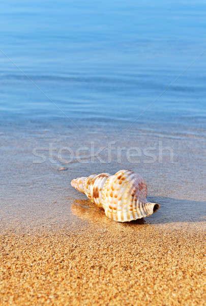 Concha sereno praia quadro azul Foto stock © akarelias
