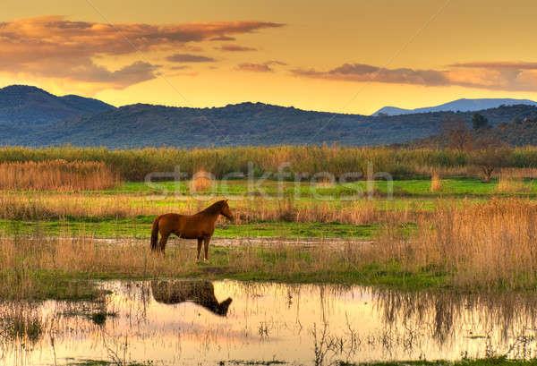 лошади пейзаж захватывающий поздно после полудня Сток-фото © akarelias
