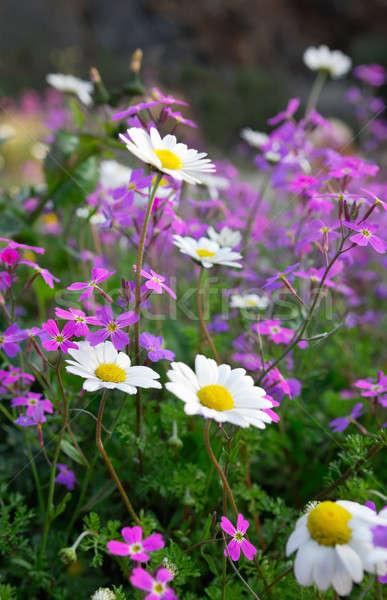 Flores primavera quadro Foto stock © akarelias