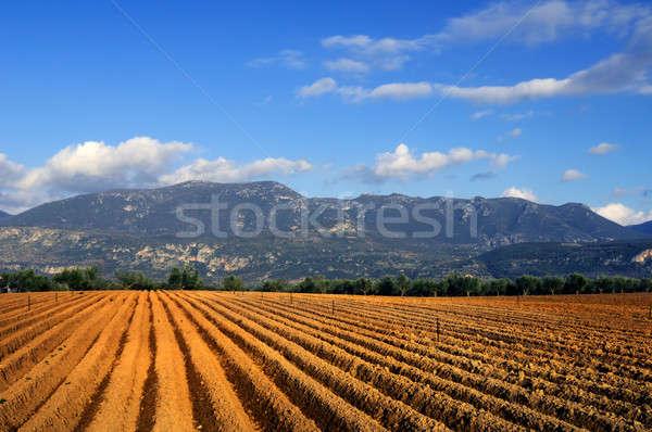 Tarım doğru hazır büyümek zengin Stok fotoğraf © akarelias