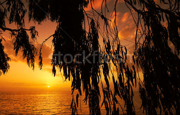 Mediterranean sunset Stock photo © akarelias