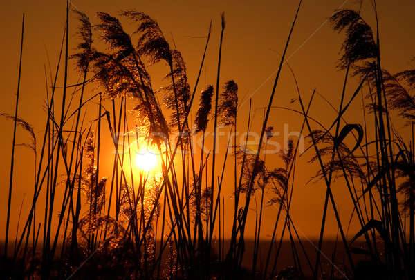Sol pôr do sol luz laranja energia vida Foto stock © akarelias