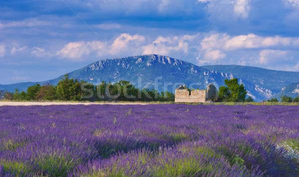 Wietrzny popołudnie krajobraz Francja lawendowe pole opuszczony Zdjęcia stock © akarelias