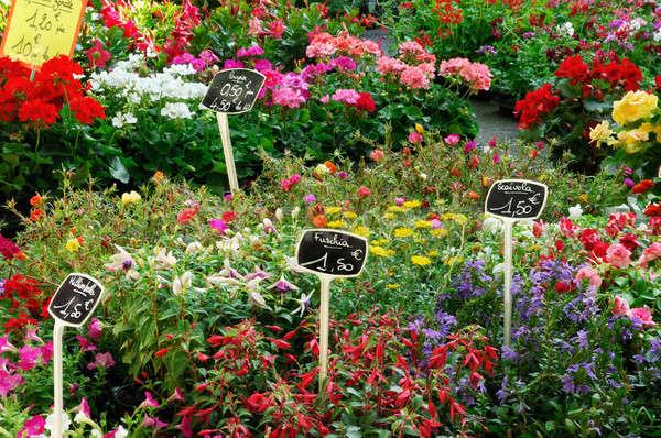 Francia szabadtér virág piac kép kint Stock fotó © akarelias